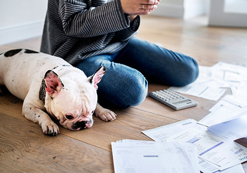 close up of a sad looking dog and woman staring at bills - effects of debt concept.